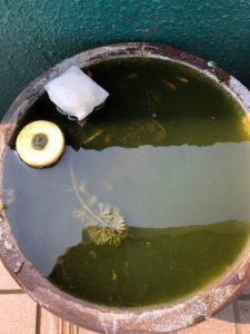 イオンフィルター使用例画像(水連鉢)1